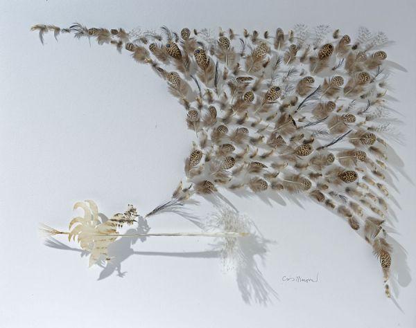 Visions West Gallery :: Chris Maynard