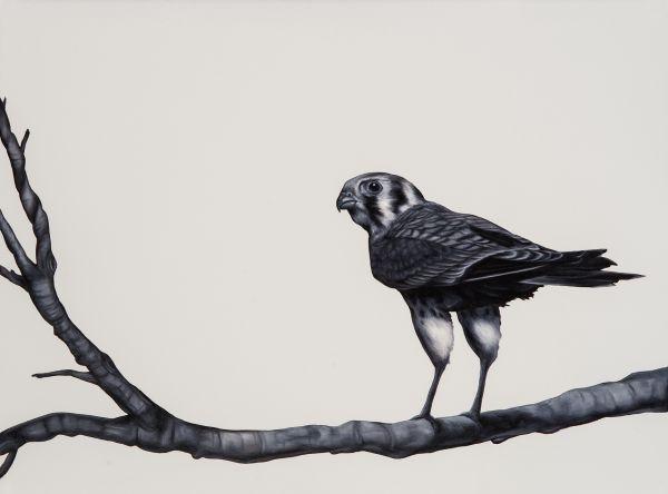 Visions West Gallery :: Birdwatcher